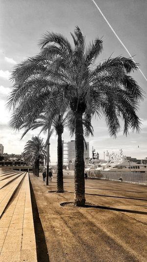 Brown And Grey Black & White Abstract Art Creativity Palm Trees Sky Something Different Palm Tree