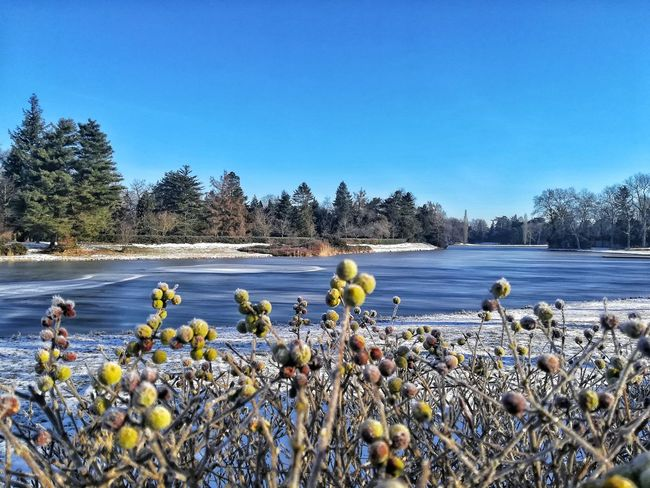 Flower Nature Water Growth Lake Plant Beauty In Nature Outdoors Day No People Blue Tranquility Tree Sky Freshness Clear Sky Fragility Flower Head Frozen Cold Temperature Winter