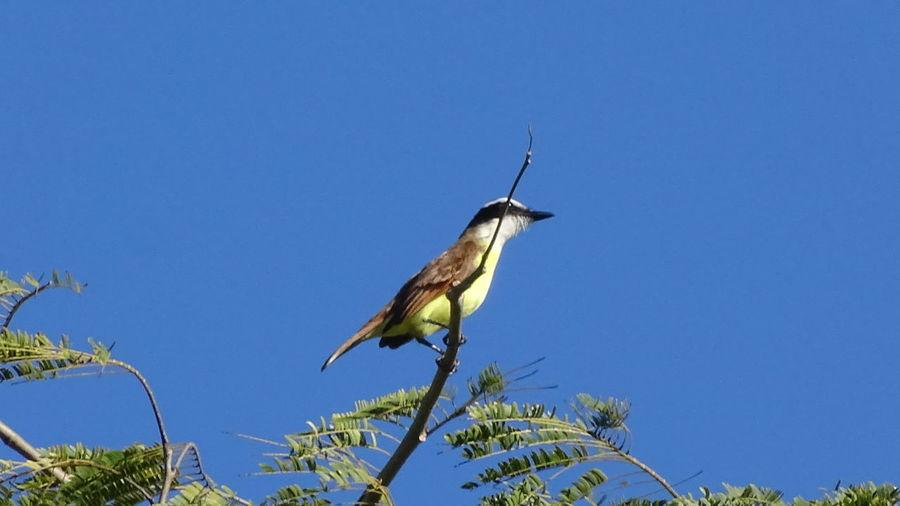 Enchanted Bird Walking Around Relaxing Enjoying The Sun