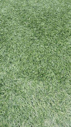 Artificial Grass Green Grass Plastic Grass Green Grass First Eyeem Photo