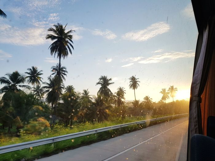 Tree City Road