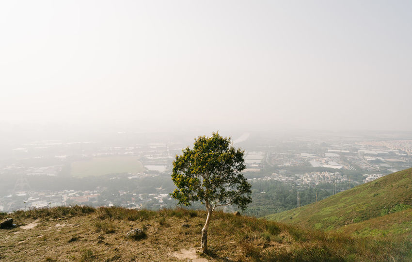 Lonely Tree Alone Landscape Lonely Mountain Nature Quiet Moments Silence Smog Tree If Trees Could Speak
