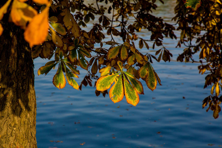 Close-up of leaves against lake
