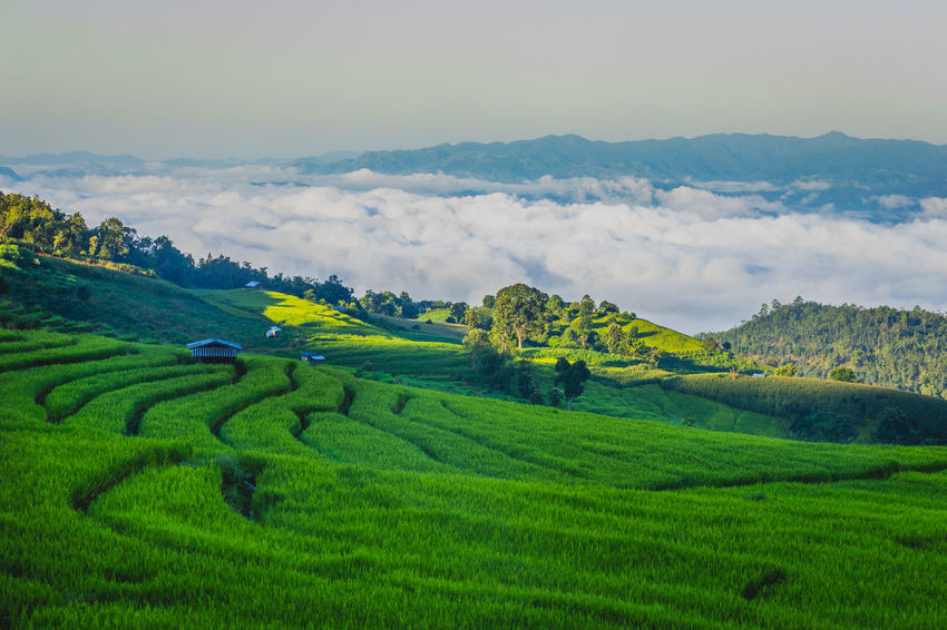 Hills Rice Paddy Sunlight Thailand Agriculture Beauty In Nature Cloud - Sky Cottage Day Environment Farm Field Fog Green Color Growth Landscape Mist Mountain Nature No People Outdoors Rice Field Rice Paddy Rice Terrace Rural Scene Scenics Sky Springtime Sun Sunbeam Terraced Field Tranquil Scene Tranquility