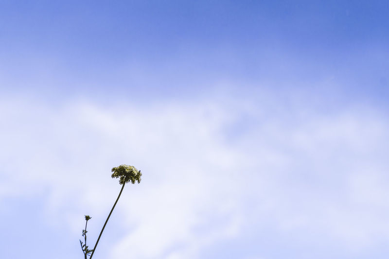 Low angle view of flowering plant against blue sky