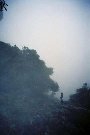 Heading up Nursery ravine one misty morning Adventure Foggy Hike Mist Mountain Nature Outdoors Tree Weather