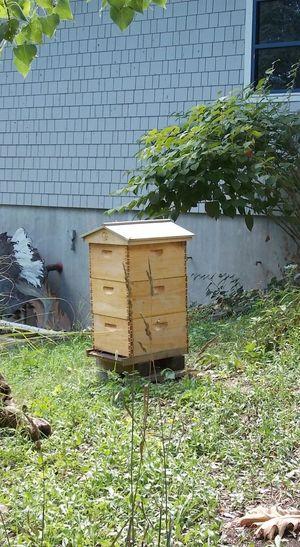 Seneca Park Zoo Bee Keeping Not My Garden Built Structure NikonL810 Pollination