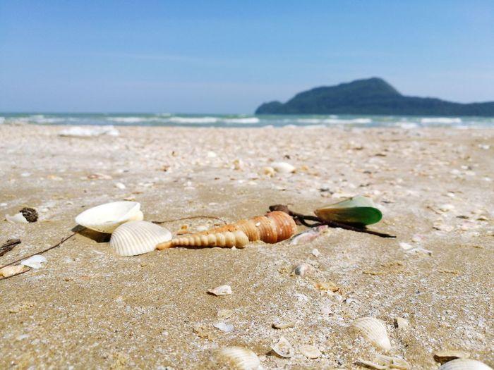 Beach Sand Sea Seashell Nature Day Coastline Island Pranburi Thailand