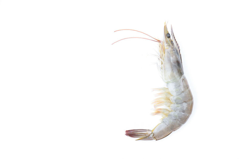 Close-up of fish against white background