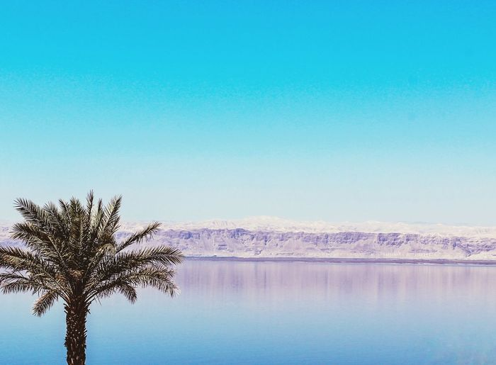 The Great Outdoors - 2017 EyeEm Awards Blue Lake Beauty In Nature Reflection Outdoors Sky Tree Nature No People Landscape Scenics Day Water Clear Sky Deadsea Dead Sea  Jordan Isreal  Mountain Lonely Tree Palestine Landscape_photography The Street Photographer - 2017 EyeEm Awards BYOPaper! Live For The Story