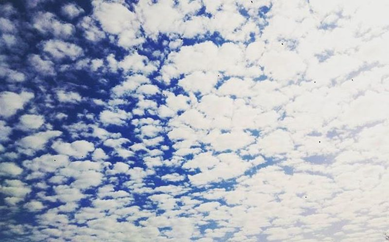 небо небонебо облака кучевые_облака кучевыеоблака пушистые синее синий белый голубой Blue Sky Clouds White Whiteclouds