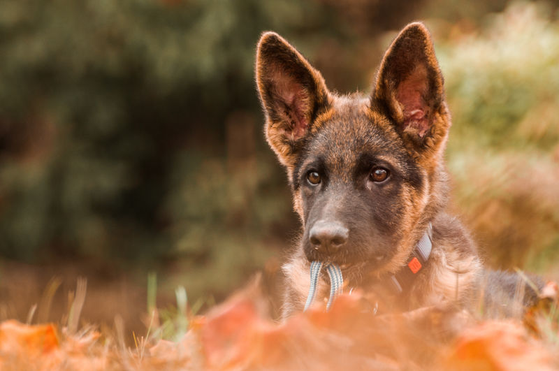 Dog on land during autumn
