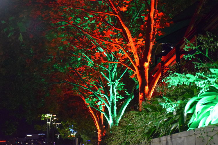 Architecture City Illuminated Nature Night No People Outdoors Tree