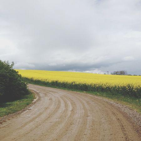 JegHarVejlesSmukkesteUdsigt Yellow Flowers Field May2015 Maj2015 Spring Vejle Vejle Sommer Lovelyday Denmark