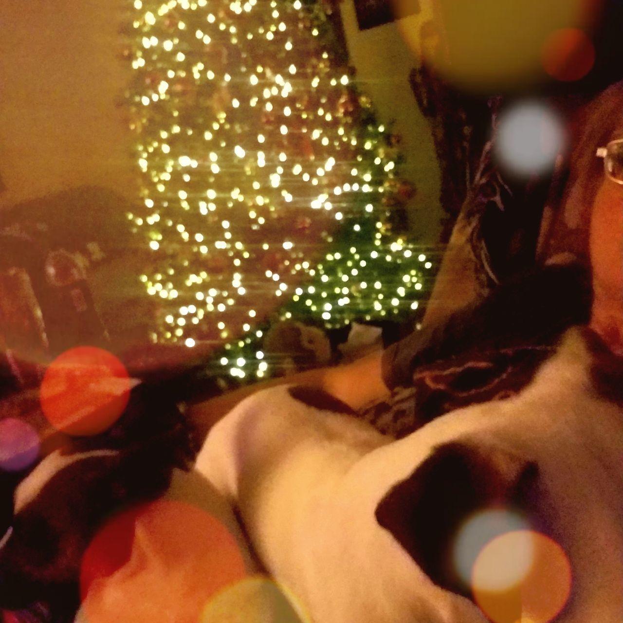 CLOSE-UP OF ILLUMINATED CHRISTMAS LIGHTS ON BED