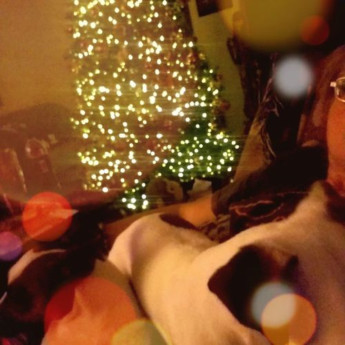 Close-up of illuminated christmas tree at home