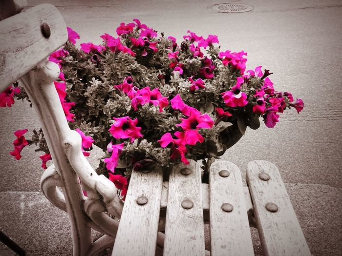 Black And Pink Norway Beauty In Nature Close-up Day Flower Flower Arrangement Flower Head Flower Pot Flowering Plant Fragility Freshness Hand Human Body Part Human Hand Inflorescence Nature Outdoors Petal Pink Color Plant Vulnerability  Wood - Material
