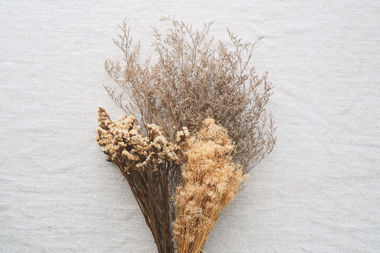 Beautiful dry flowers for interior decoration on brown fabric background. Yellow Vintage Studio Stem Set Sack Reed Plant Ovatus Ornamental Nature Natural Leaf Lagurus Interior Green Grasses Grass Flower Floral Fabric Dry Design Decorative Decoration Decor Dead Color Collection Closeup Bunch Brown Bouquet Botanical Blossom Beauty Beautiful Background Autumn Arrangement
