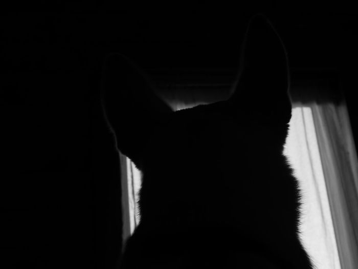 Animal Themes Blackandwhite Close-up Day Dog Shillouette Domestic Animals Indoors  Mammal No People Pets Shillouette Window