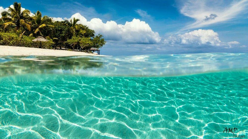 Beautiful Fiji, Navini Island Island Palm Trees Underwater