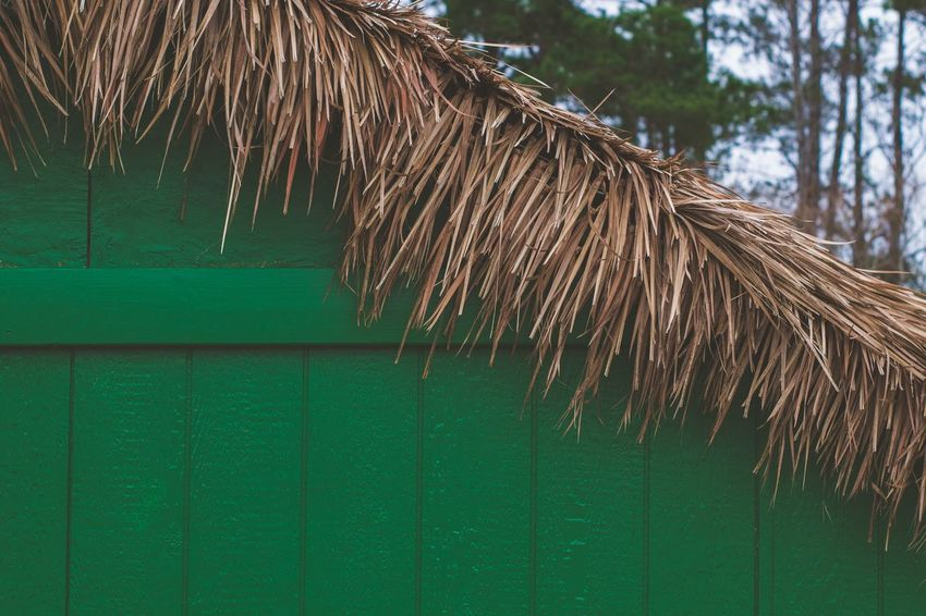 Exterior Built Structure Green Roof Thatched Roof Outdoors Tree Day Shelter No People Close-up