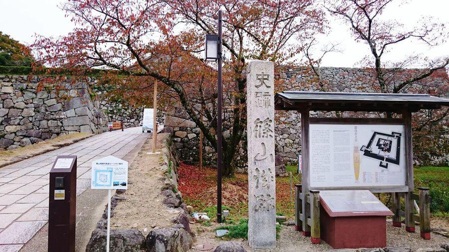 【Hyogo,Japan】Sas