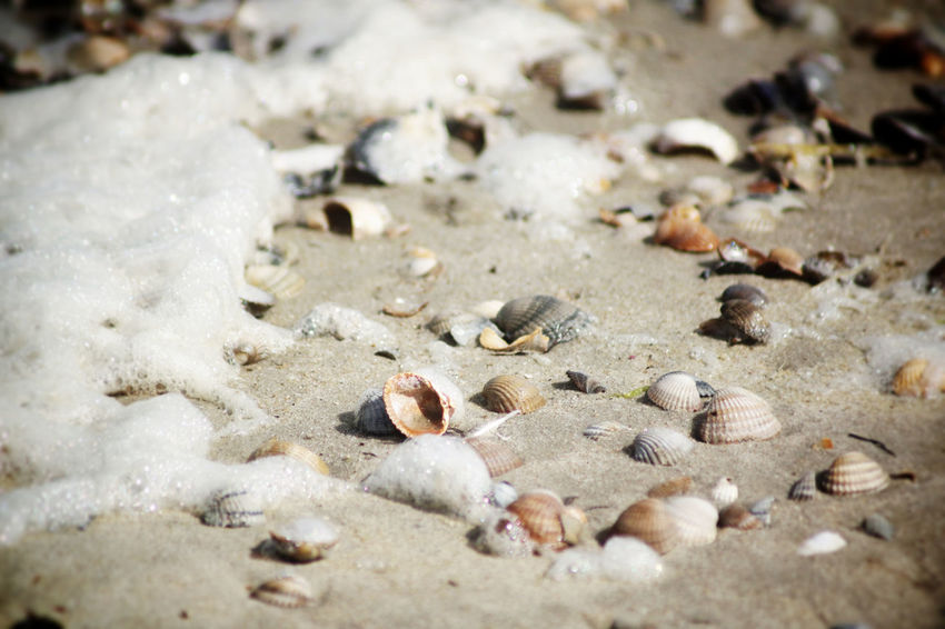 seashells and seafoam at the beach Animal Shell Beach Beachphotography Close-up Day Land Marine Nature No People Nobody Norderney Nordsee North Sea Ocean Outdoors Pebble Sand Sea Sea Foam Seashell Seaside Selective Focus Shell Stone - Object Water