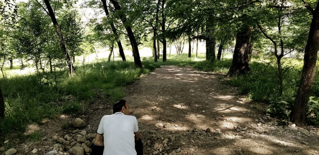 Rear view of man sitting against trees in forest