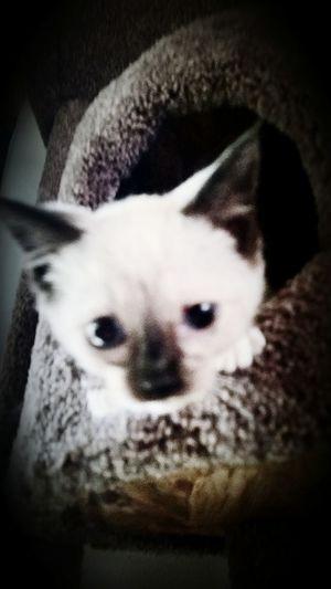 Pets Corner Kitty!  Luna❤