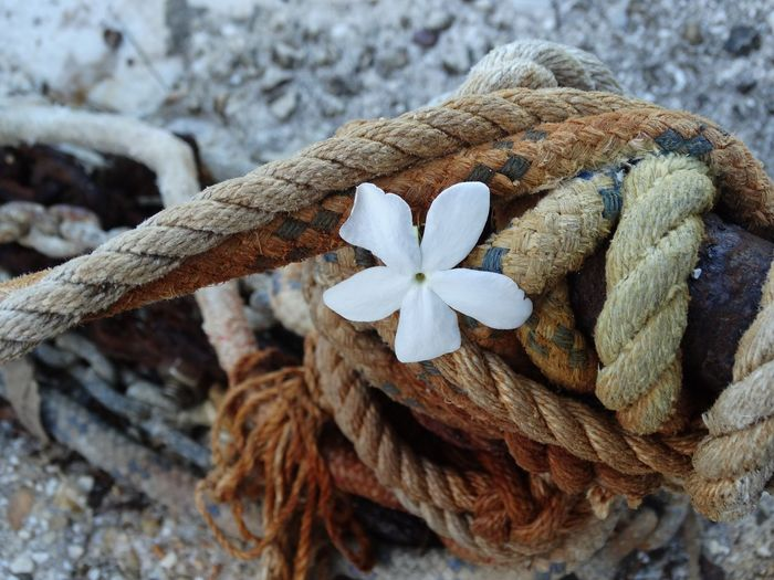 Close-up of flower amidst rope tied up