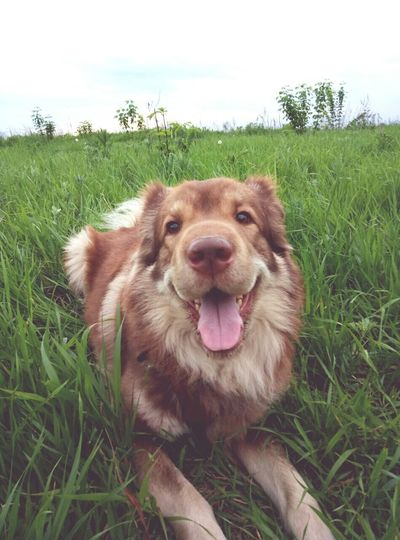 лучшийдруг мойпес счастливывместе Bestfriend Dog MyJoy