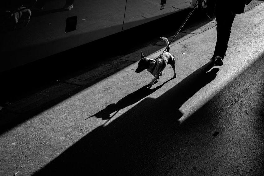 Streetphotography Shadow Streetlife Black And White Paris Je T Aime Lesparisiennes Beautifulparis strertAmazingparis Fujifilm_xseries Fujifilm X-E2 Fujifilmph Fujixseries Fujixclub Fujifilm Street Photography Streetphoto_bw Streetphotographer Xphotographer Dog Animal Themes Sunlight Domestic Animals Mammal Pets One Animal