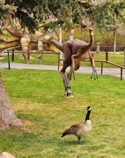 Look Out!! Look Behind You Goose Dinosaurs Dinosaur Park Bird Wildlife Water Fowl Nature