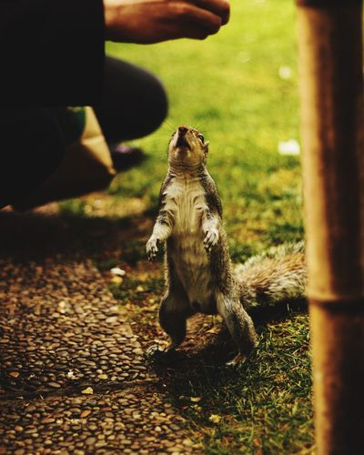 Canon Animal Themes Animals In The Wild One Animal Mammal Day Real People Outdoors Sitting Nature Low Section Close-up Canonphotography Canoneos CanonEOS600D Canon600D Squirrel The Portraitist - 2017 EyeEm Awards