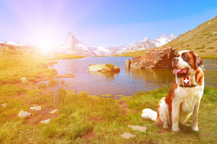 Dog standing in a lake against sky