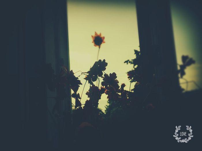 Солнце из цветка First Eyeem Photo