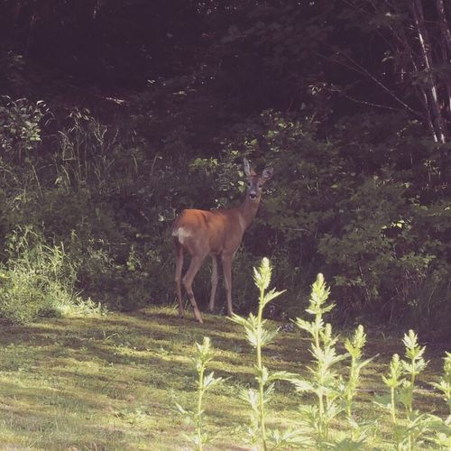 Nature Animals In The Wild Deer Green Nature Outdoors Daylight Forest