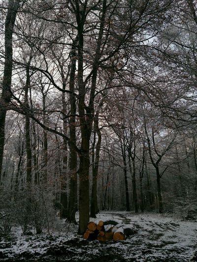 Winterwonderland ?