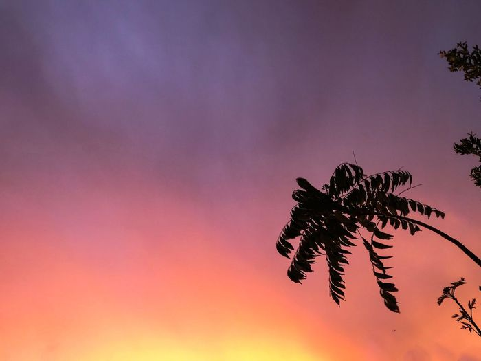 Nature Sunset No People Growth Beauty In Nature Sky Low Angle View Outdoors Tranquility Scenics Tree Day Close-up Eye4photography  EyeEm Nature Lover EyeEm Gallery