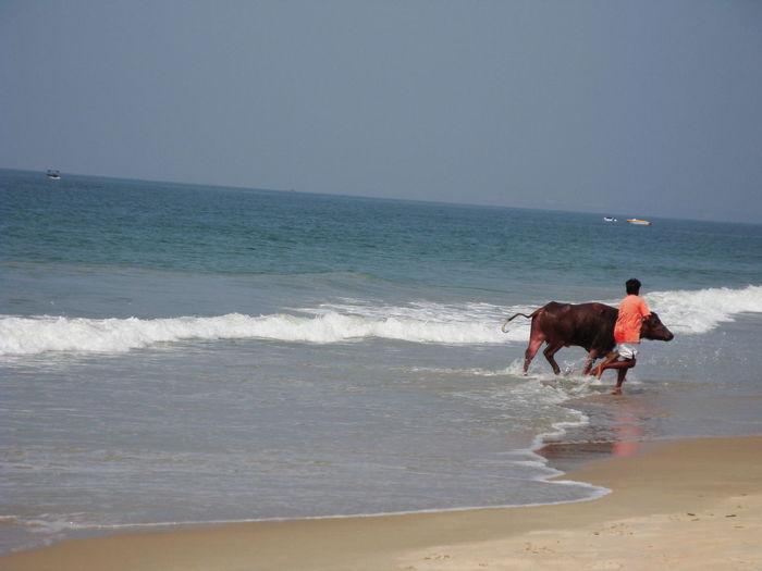 Horse on shore at beach against sky