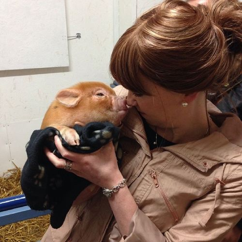 Cuddling a piglet ♡♥ Pennywell Piglet Pig Cute baby babyanimals
