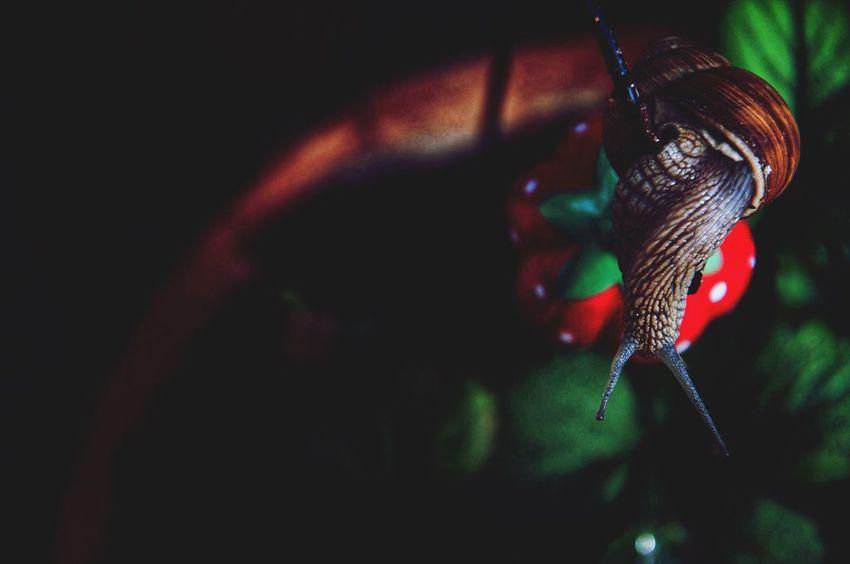 Snail 🐌🍓 First Eyeem Photo