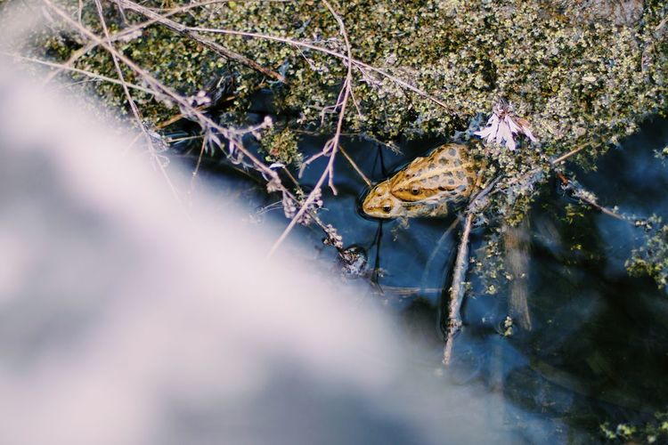 Nature No People Russia Nature Water Beauty In Nature Nature_collection Full Frame Animal Themes Frogs Love Nature Love Animals