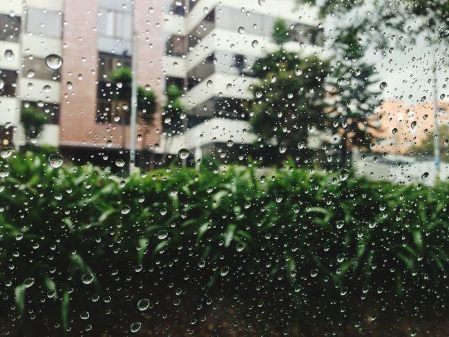 Rain Window Taxi Plants City Building Water Drops Glass Sadness Rainy Days Melancholic Lluvia Ventana Plantas Verde Green Ciudad Edificios Gotas De Lluvia Gotas De Agua Vidrio Tristeza Showcase: November Melancolia