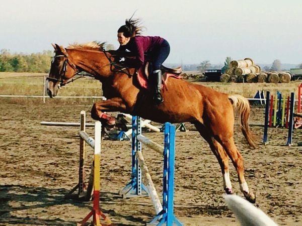Horsejumping Horse Jump Horse Jumping Training Jump Blonde Scirocco