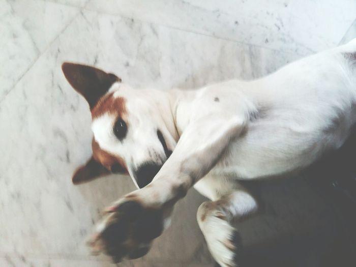 High angle view of dog lying down