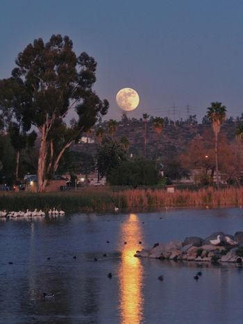 Moon Full Moon Tree Nature Reflection Water Lake Beauty In Nature Night Tranquil Scene Tranquility Moon Surface Outdoors Scenics No People Sky Astronomy Bird