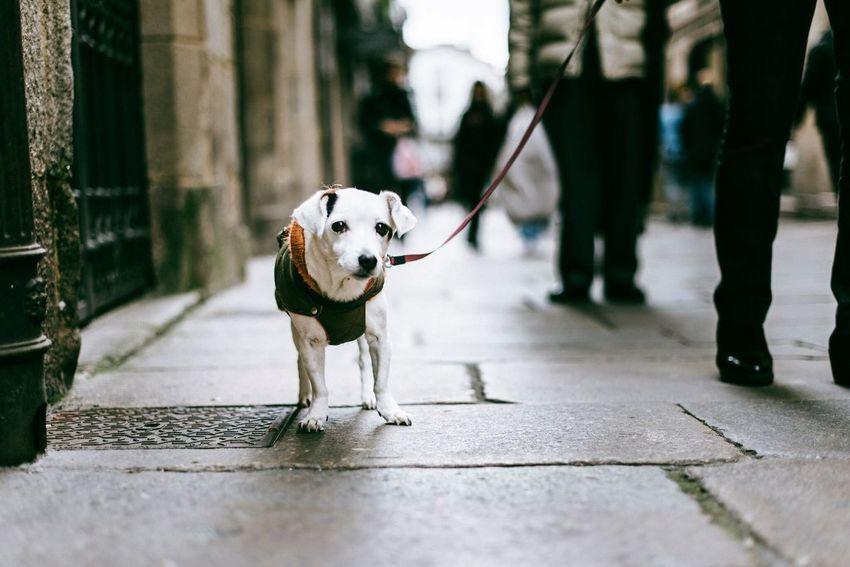 Pets Dog Domestic Animals Streetphotography Street Photography Luisgonçalvesfotografia Luisgonçalves The Week On EyeEm Eye4photography  Fresh On Market 2017