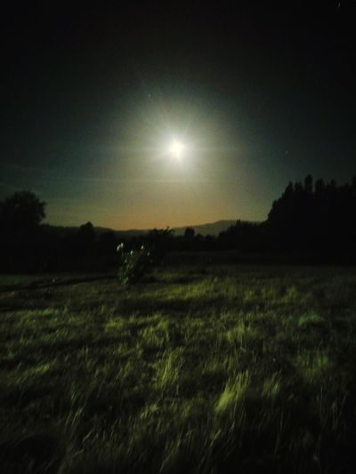 Moon Nature Night Field Landscape No People Outdoors Moonlight Grass Tree Sky Beauty In Nature Clear Sky Star - Space Astronomy