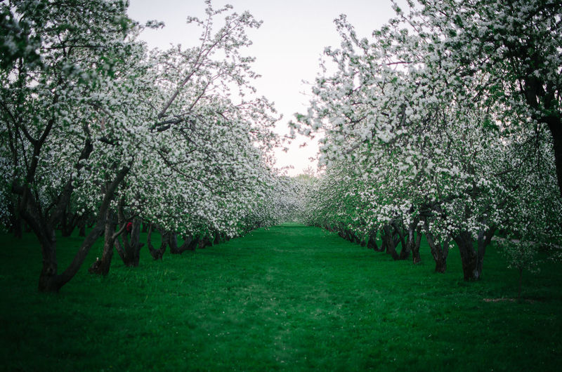Scenic view of flowering trees in park